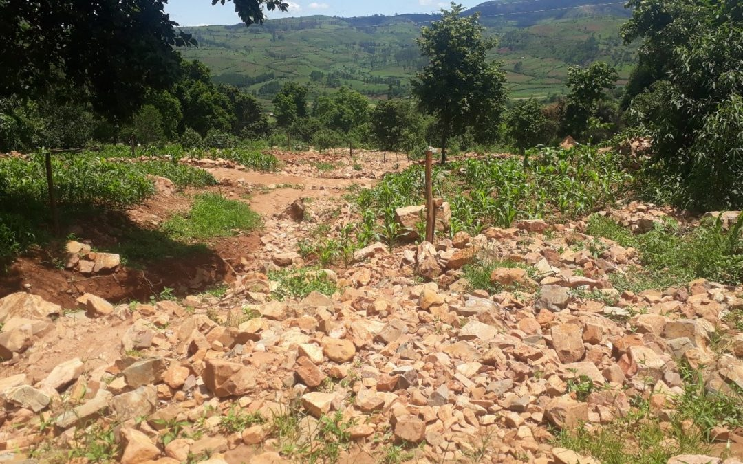 Hope and hopelessness in the aftermath of Cyclone Idai in the Chimanimani District of Zimbabwe: An assessment of the potential of agroecology