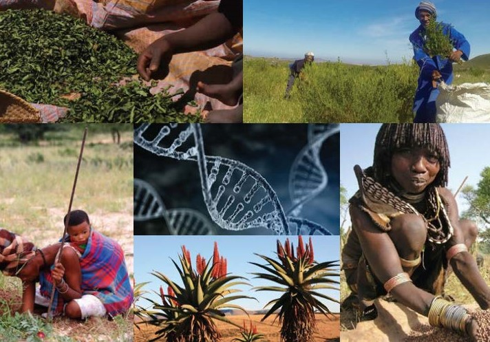 Connecting the dots … biodiversity conservation, sustainable use and access and benefit sharing